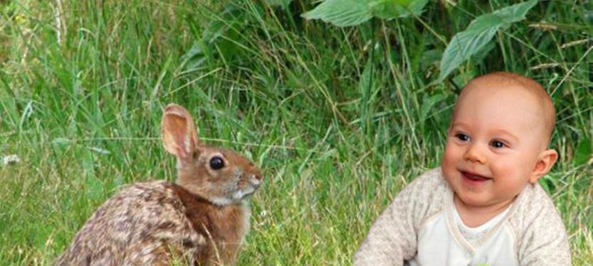 Cottontails versus Babies